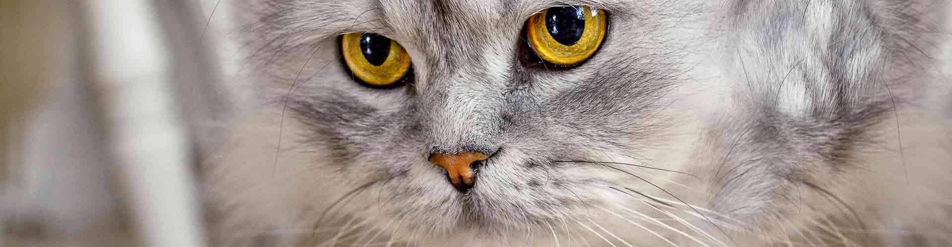 01-Katze
